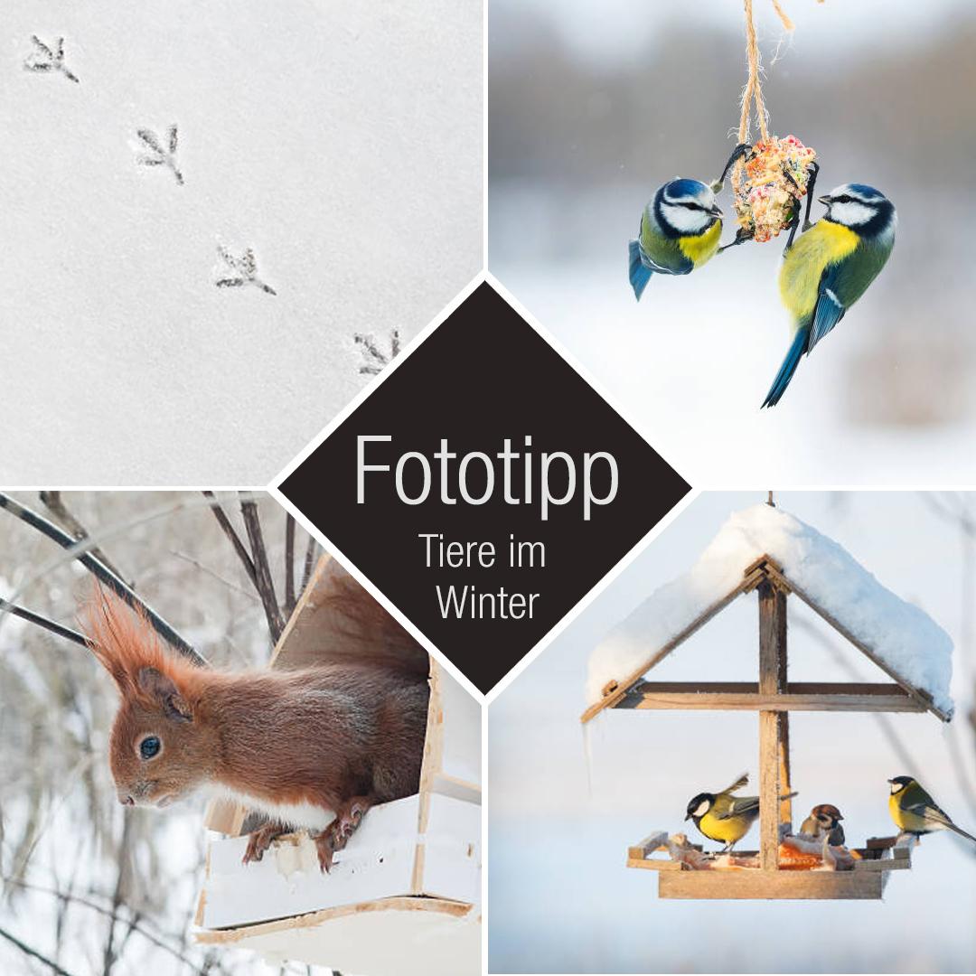 Fotografietipp Tiere im Winter