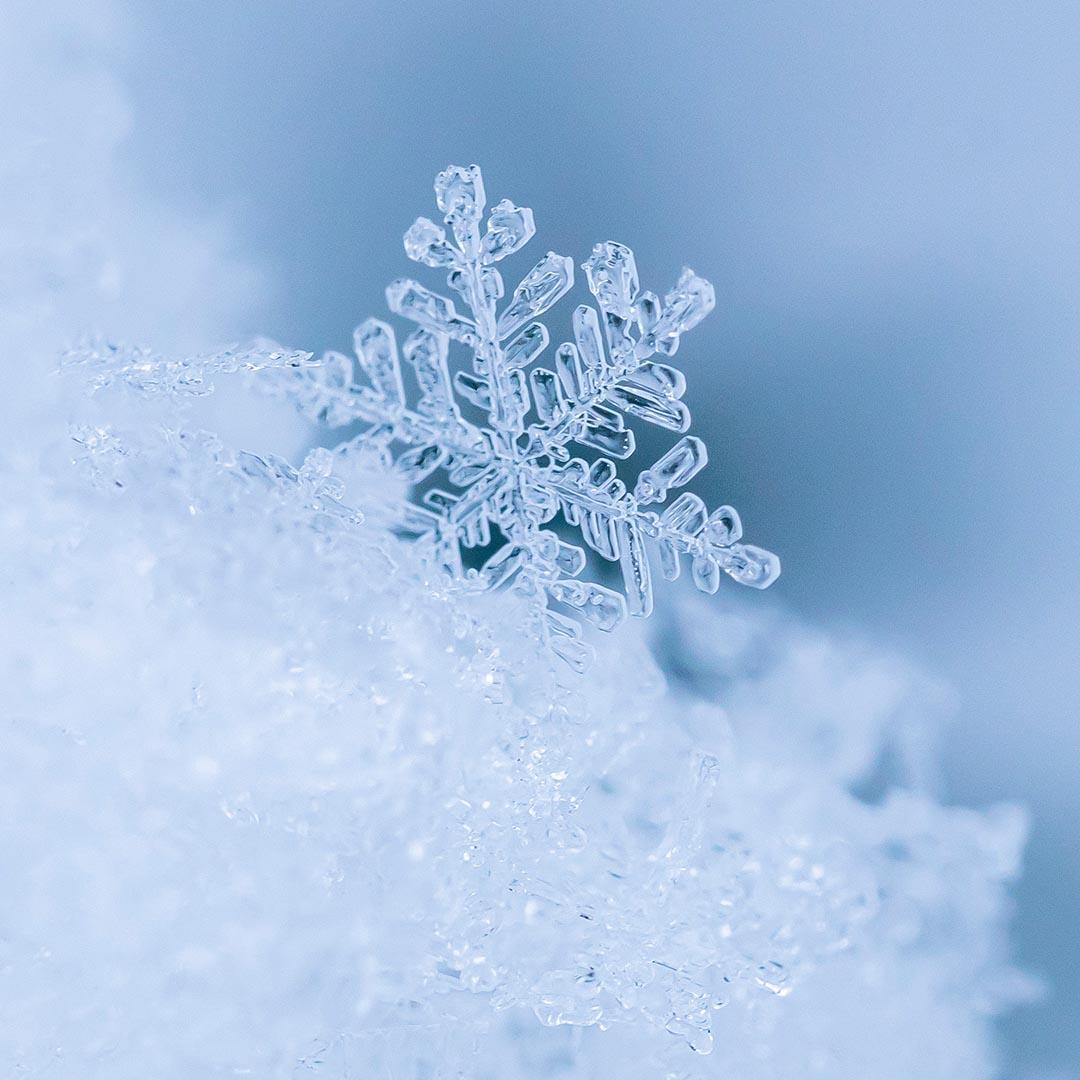 Schneeflocke Makroaufnahme