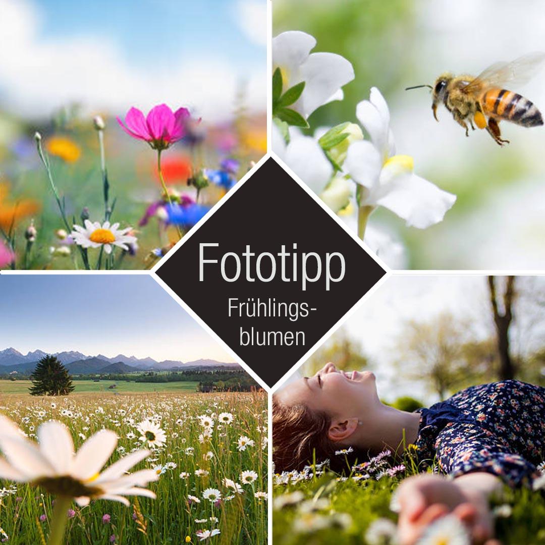 Fotografietipp Frühling