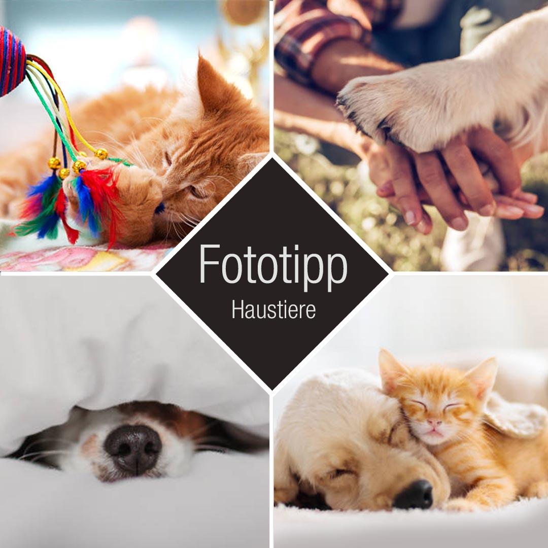 Fototipp Haustiere